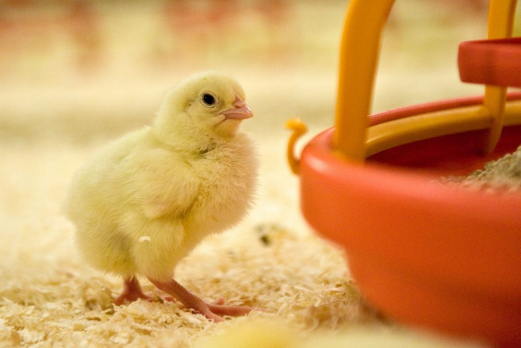 EU Poultry meat sector says NO to the Mercosur Agreement